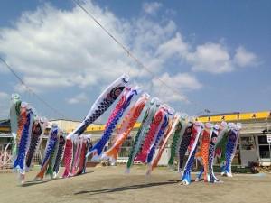 【画像】東日本大震災支援・鯉のぼりプロジェクト_2014年度_こいのぼりたくさん